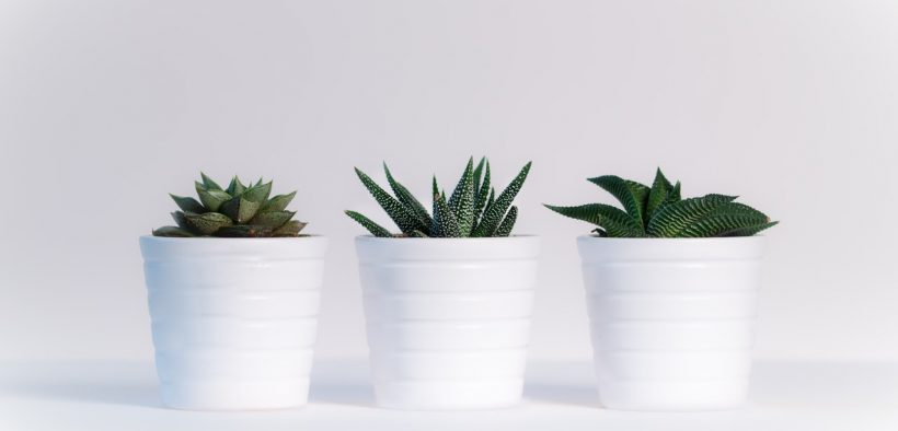 Trois plantes assorties
